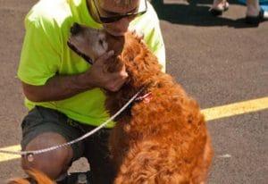 Therapy Dog Ahava