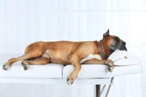dogs feel stress too