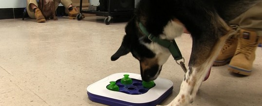 Your Donations at Work – Canine 1st Aid