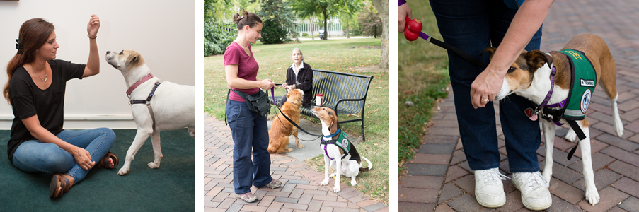 Client Training: Psychiatric Service Dogs