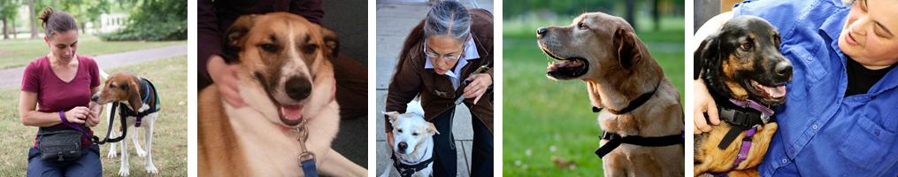 Psychiatric SErvice Dogs Program-grp