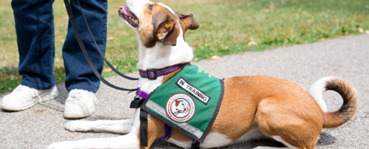 What makes Healing Companions' Psychiatric Service Dogs Special and How do they differ from other Service Dogs, Emotional Support and Therapy Dogs?