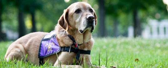 Support Healing Companions and Make a Difference