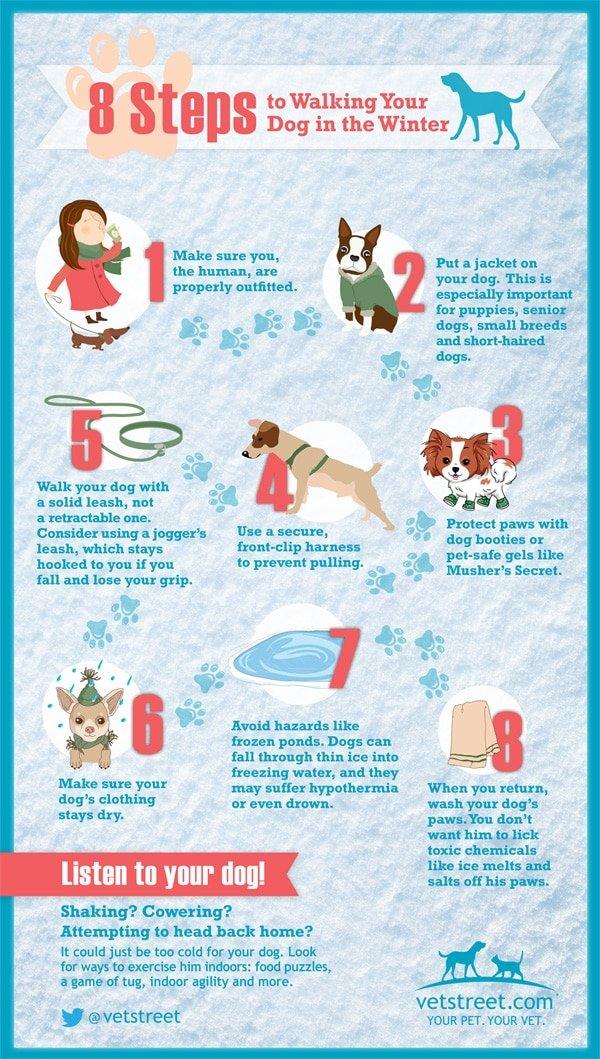 Winter Walk Infographic provided by VetStreet.com
