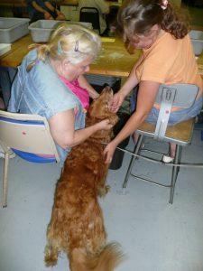 Ahava Therapy Dog