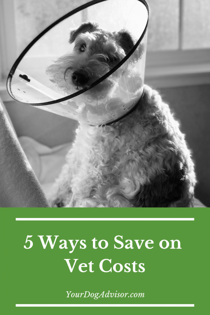 5 ways to save vet costs